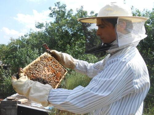 Včelař Jakub Procinger při prohlídce úlu (Foto © 2015 Věra Procingerová)